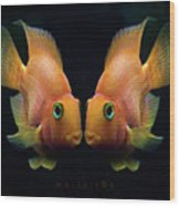 Red Parrot Fish Wood Print