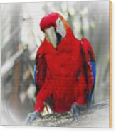Red Parrot Wood Print