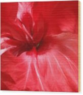 Red Passion 2 Wood Print