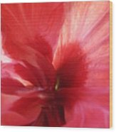 Red Passion 3 Wood Print