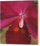 Red Passion Orchid Wood Print
