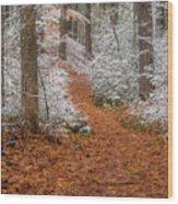 Red Path Wood Print