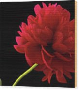 Red Peony  Wood Print
