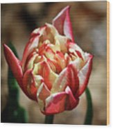 Red Peony Tulip Wood Print
