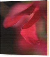 Red Petal Wood Print