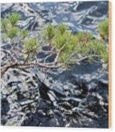 Red Pine Wood Print