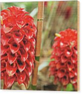 Red Pineapple Ginger Plant Wood Print