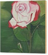 Red-pink Rose Wood Print