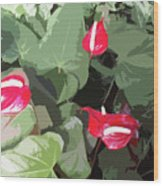 Red Plant Wood Print