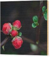 Red Plum Flowers In Rain Wood Print
