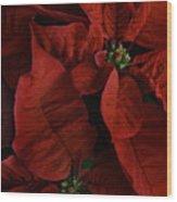 Red Poinsettia Wood Print by Ann Garrett