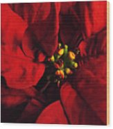 Red Poinsettia Floral Art Wood Print