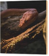 Red Poisonous Snake Wood Print
