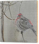 Red Poll In Winter Wood Print