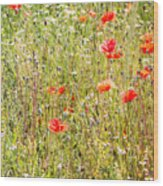 Red Poppies And Wild Flowers Wood Print