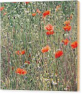 Red Poppies In A Summer Sun Wood Print