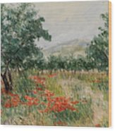 Red Poppies In The Olive Garden Wood Print