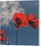 Red Poppies On Blue Sky Wood Print