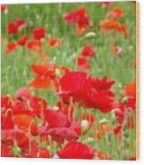 Red Poppy Flowers Meadow Art Prints Poppies Baslee Troutman Wood Print