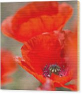 Red Poppy For Remembrance Wood Print