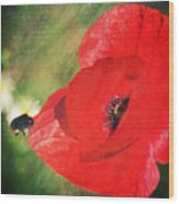 Red Poppy Impression Wood Print
