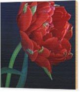 Red Princess Tulip On Blue Wood Print