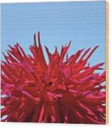 Red Purple Dahlia Flower Art Print Giclee Baslee Troutman Wood Print