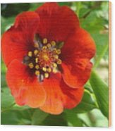 Red Red Bloom Wood Print