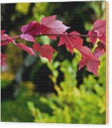 Red Red Maple Leaves Wood Print