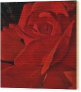 Red Red Rose  Wood Print by Daniele Smith