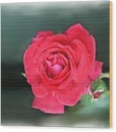 Red-red Rose. Wood Print