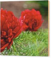 Red Remembrance Wood Print