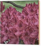 Red Rhodies Wood Print