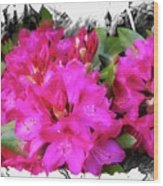Red Rhododendron Flowers Wood Print