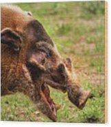 Red River Hog Wood Print