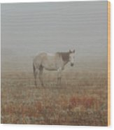 Red Roan In Mist Wood Print