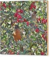 Red Robin And Cedar Waxwing 1 Wood Print