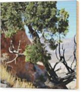 Red Rock Canyon Nv 5 Wood Print