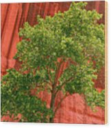 Red Rock Green Tree Wood Print