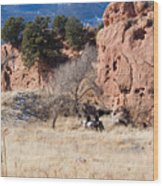 Red Rock Riders Wood Print