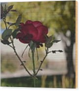 Red Rose 1 Wood Print