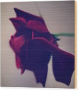Red Rose Abstract 1 Wood Print