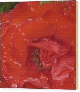 Red Rose After Rain Wood Print