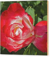Red Rose And A Sidecar At Pilgrim Place In Claremont-california Wood Print