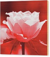 Red Rose Beauty Wood Print