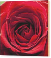 Red Rose Colour Isolated On A Green Background. Wood Print