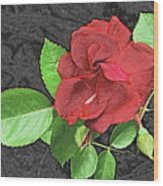 Red Rose For My Lady Wood Print