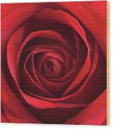 Red Rose Wood Print by George Lovelace
