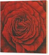 Red Rose II Wood Print