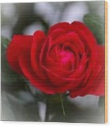 Red Rose Wood Print by Issabild -